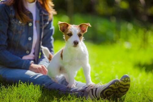 vínculo entre cachorros e humanos
