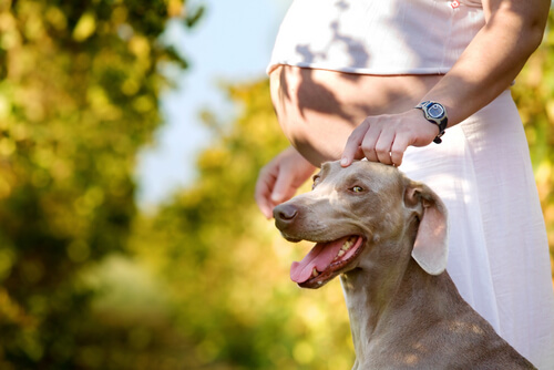 Vivir con un perro en el embarazo es beneficioso para salud