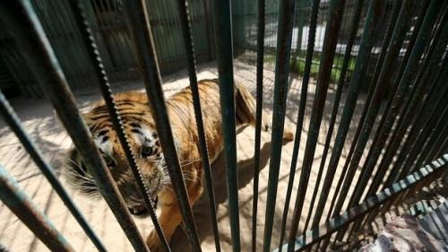 Un zoo de Gaza vende sus animales por no poder alimentarlos
