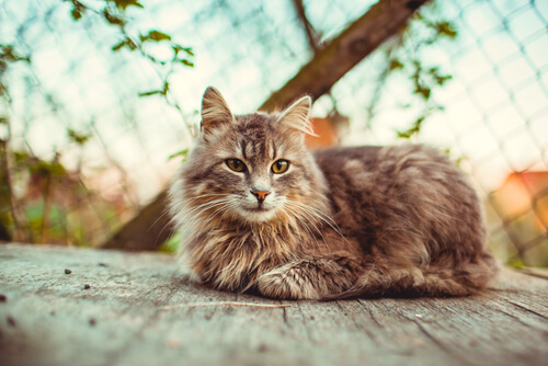 10 razones por las que es bueno adoptar un gato adulto