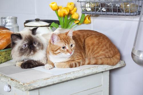 ¿Tienes alergia a los gatos? Estos trucos pueden ayudarte a solucionarlo