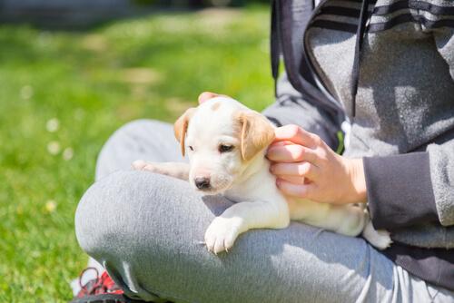 cachorro, un nuevo amigo