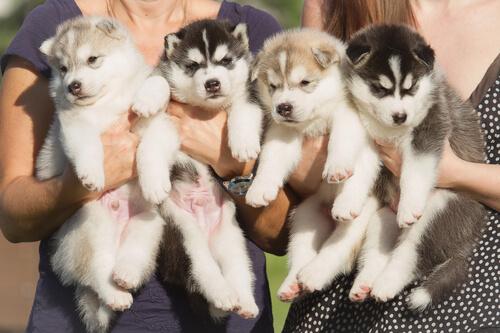 Cachorros en brazos de peronas