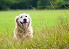 carta a mi perro adoptado