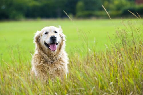 Carta a mi perro adoptado que está en el cielo