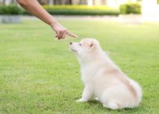 castigo para perros
