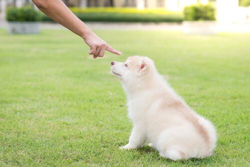 Cuál es el castigo más adecuado para el perro