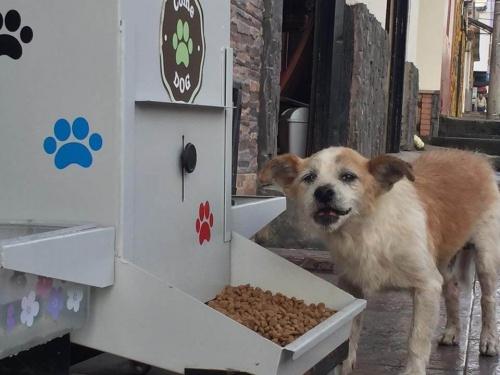 6000 perros beneficiados con el comedog