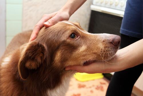 ¿Qué hago si mi perro tiene un ataque de convulsiones?