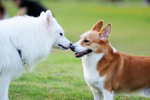 Cómo conseguir que dos perros se hagan amigos