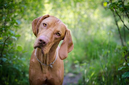 ¿Por qué es importante saber el grupo sanguíneo de tu perro?