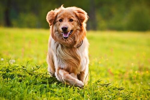 el pelaje de tu perro