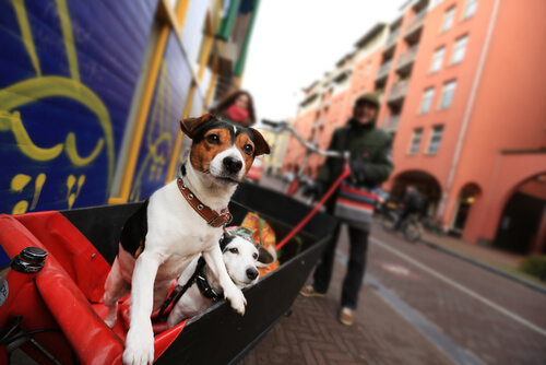 na Holanda não existe cães de rua