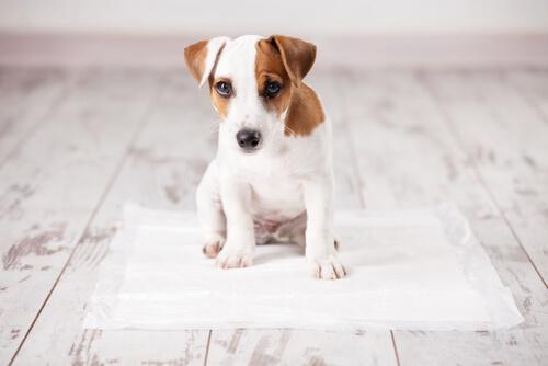 Cómo enseñar a un perro a hacer sus necesidades en el papel