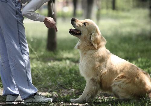 6 errores en el adiestramiento de tu perro