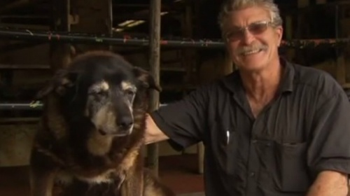 Fallece el perro más viejo del mundo