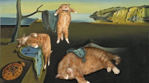 Zarathustra, el gato artista