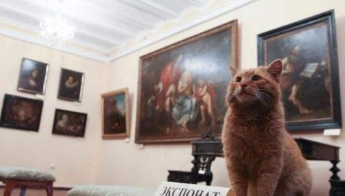 Un gato se convierte en conserje de un museo