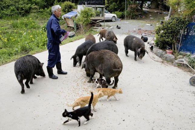 El guardián de los animales de Fukushima