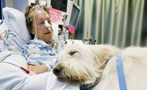 Hospital en Canadá permite el ingreso de mascotas