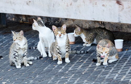 instituto de atencion animal, gatos abandonados