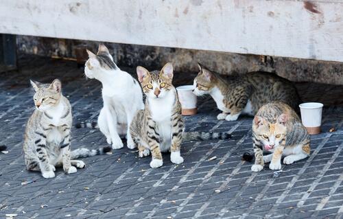En la Ciudad de México plantean crear un Instituto de Atención Animal