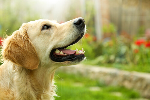 ¿Es peligroso jugar con láser con tu mascota?