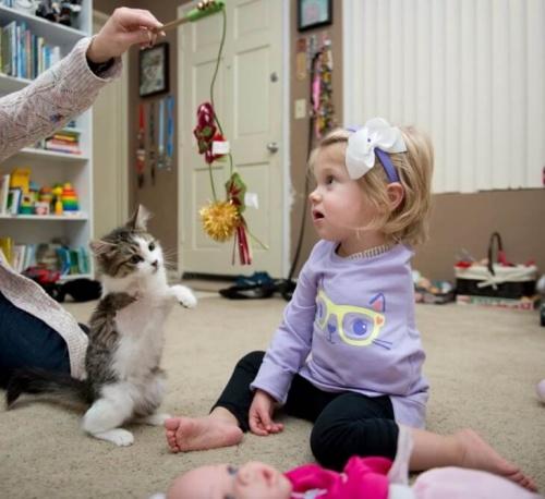 Los mejores amigos: un gatito de tres patas es adoptado por una niña con un brazo amputado