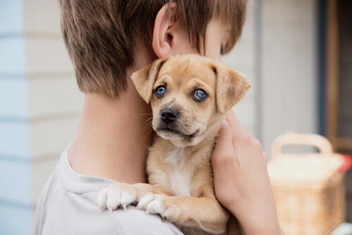 Ninos perros asmaticos para