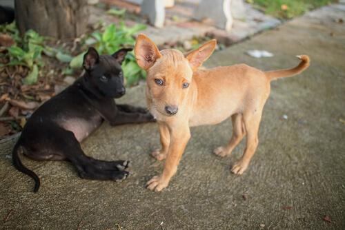 mascotas sin alimentos en venezuela