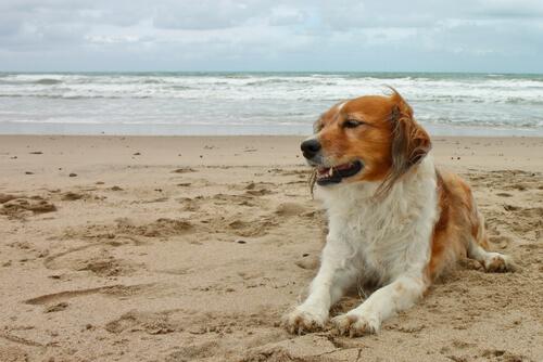 mi perro se marea