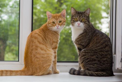 Nuevo gato en casa: cómo evitar problemas con otros felinos