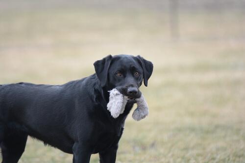7 objetos no aptos para tu mascota
