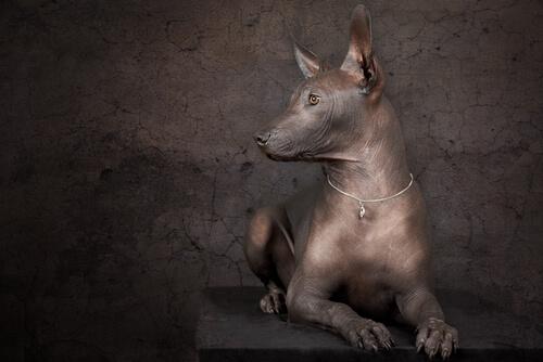 4 obras de arte con perros