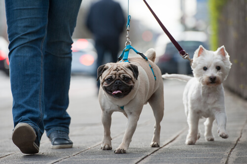 10 tips para mejorar los paseos con tu perro