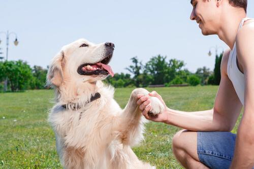 Tu perro puede detectar si estás feliz o enfadado