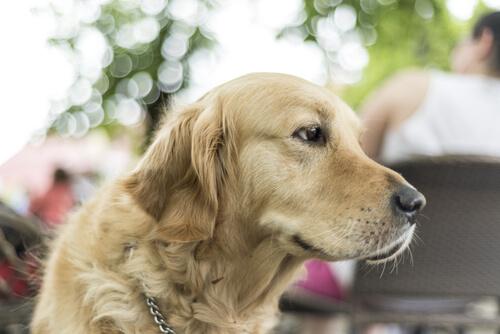 5 motivos para vivir con un perro grande