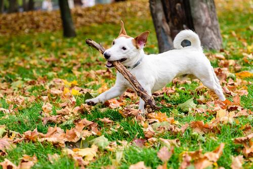 perro juega con palos