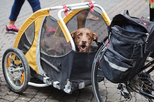El perro que recorrió en bicicleta todo el Perú