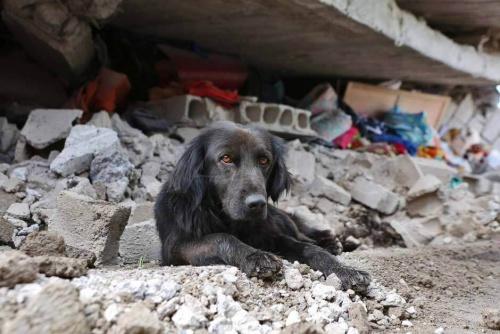 Terremoto en Ecuador: un perro se niega a abandonar su casa destruida