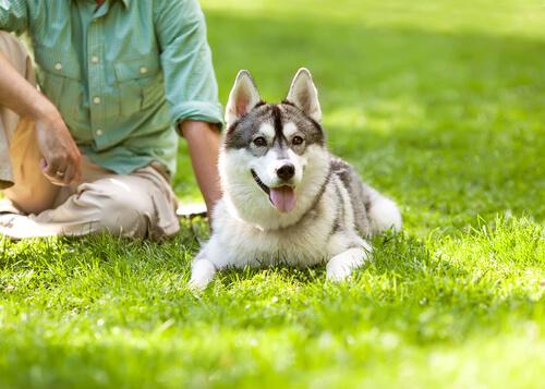 perro y hombre lider de la manada