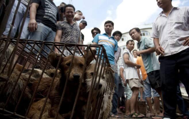 perros para el festival de carne de perro 2