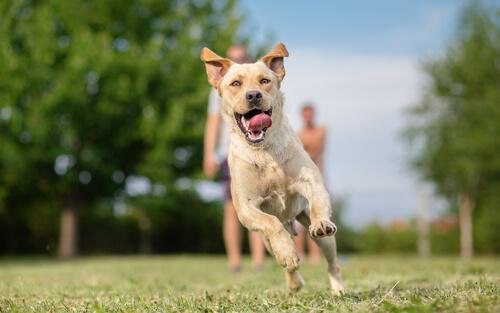 perros para terapia