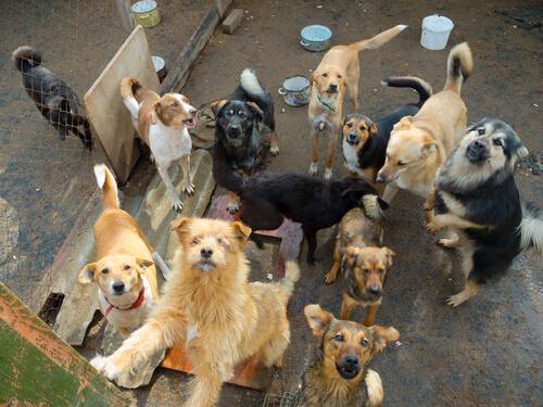 ¿Cómo ayudar a los refugios para adoptar perros y gatos?