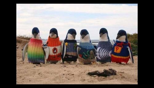 Un hombre de 109 años teje pequeños jerséis para ayudar a los pingüinos