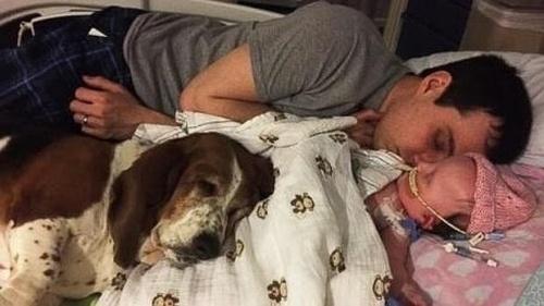 Basset Hound, Un perro que permaneció con su dueña pequeña hasta el final