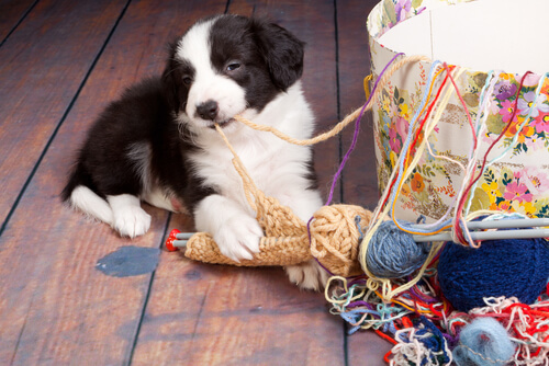 7 accidentes domésticos que pueden ser peligrosos para un perro
