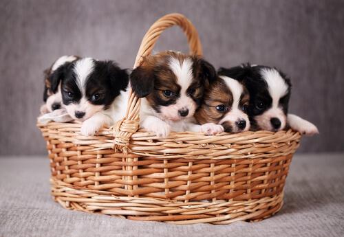Adoptar o no adoptar