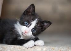 adoptar un gato de la calle