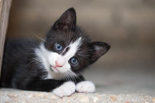 Una guía para adoptar un gato de la calle